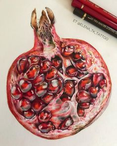 Colored Pencil Artwork, Color Pencil Art, Botanical Art, Botanical Illustration, Ice Cream Painting, Pomegranate Art, 30 Day Drawing Challenge, Copic Marker Art, Food Painting