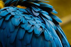 Blue and Yellow Macaw Photo by Anna Jo — National Geographic Your Shot
