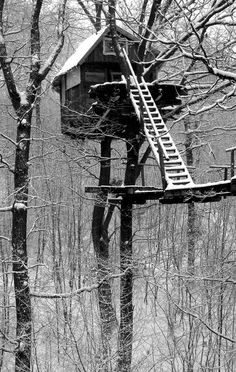 Tree house in Hungary Cabana, Woodland House, Cool Tree Houses, Tree House Designs, In The Tree, Cabins In The Woods, Interior Exterior, Play Houses, Architecture Details