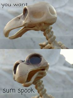 29 Spooky Pics And Memes That Will Scare Boredom Out Of You - Gallery Spooktober Memes, Bad Memes, Funny As Hell, Funny Love, Top Funny, Funny Posts, October Memes, Funny Images, Funny Pictures