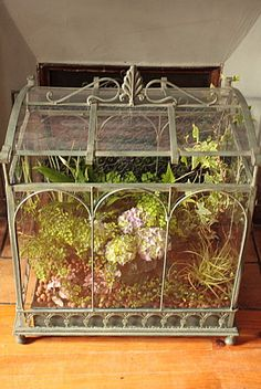 terrariums serre greenhouse terrariums on pinterest. Black Bedroom Furniture Sets. Home Design Ideas