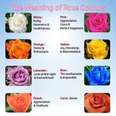 Rose Color Chart Meanings Flower Meanings Pinterest Rose Color