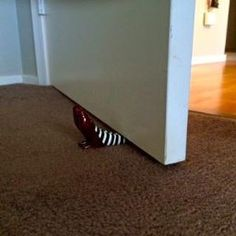 Amazon.com: The Wizard of Oz Red Ruby Slippers Doorstop - Wicked Witch of the East: Home & Kitchen