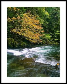 Fall colors cover the banks of the Clackamas River as its makes its way through the Oregon Cascades.  #oregon #forest #river #fall #leaves #naturephotography #outdoors #gifts #giftideas  #artprint #print #wallart #walldecor #homedecor #decor