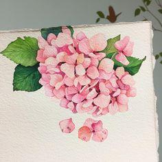 오늘은 수국 한송이 . . #월요일 Watercolour Drawings, Watercolor Portrait Painting, Watercolor And Ink, Watercolor Flowers, Botanical Flowers, Botanical Art, Art And Fear, Hydrangea Painting, Floral Drawing