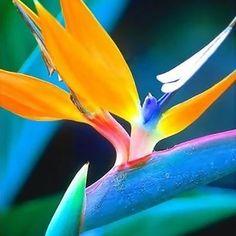 oiseau de paradis de fleurs
