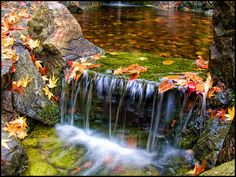 Colorfall, via Flickr.  I love this picture.