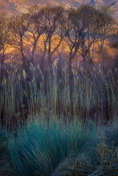 Morning Fields - Owen's Valley, California by Marc Adamus