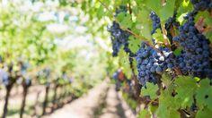 エノテカでイタリア各地の豊富な種類のワインを試そう