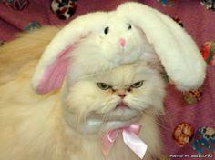 haha! Grumpy kitty.