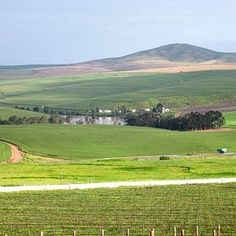 Organic wines produced in the Swartland wine region of South Africa. Sa Tourism, Organic Wine, Wine Wednesday, Fine Wine, Wine Making, Countries Of The World, Abundance, Wines, South Africa