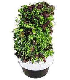 We have our Aeroponic Vertical Tower Garden going yeah it