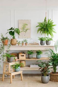 30 Modern and Elegant Vertical Wall Planter Pots Ideas - Home Decor Ideas Kitchen Wall Shelves, Space Kitchen, Kitchen Decor, Rental Kitchen, San Francisco Houses, Decoration Plante, Interior Plants, Home Living, Plant Decor