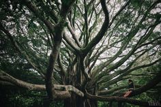 Pipiwai Trail to Waimoku Falls, Maui, HI - a fairly short hike past a huge banyan tree, through a bamboo forest, to a 200 foot waterfall. The whole hike is pretty easy and takes about 4 hours at a leisurely pace.