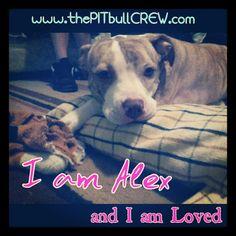 I am Alex    THEPITBULLCREW.com
