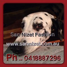 Finn features in a San Nizet Poster for the Eumundi Wednesday markets