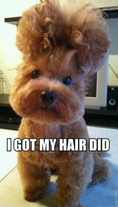 What a hair due! So cute !my dog would probably won't let me do that