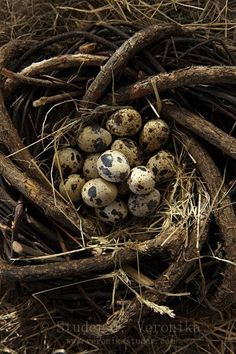 """Quail Eggs"" - contain 13 percent proteins compared to 11 percent in chicken eggs. Also contain 140 percent of vitamin B1 compared to 50 percent in chicken eggs and provides five times as much iron and potassium."