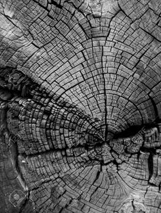 Cracked Tree Stump Showing Age Rings In Black And White Stock Photo, Picture And Royalty Free Image. Image 4330534.