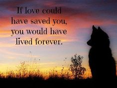 A sympathy gift will help ease the pain of pet loss; these heartwarming pet memorials and gifts include ways to say goodbye after a beloved dog or cat dies. Grieving pet loss is a sad but important way to heal – and these sympathy gifts and pet memor Dog Death Quotes, Pet Quotes Dog, Pet Loss Quotes, Animal Quotes, Losing A Dog Quotes, Lost Dog Quotes, Pet Loss Grief, Loss Of Dog, Groomsmen