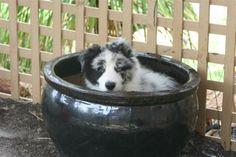 Mav Puppy