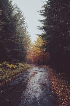 fall wanderings.