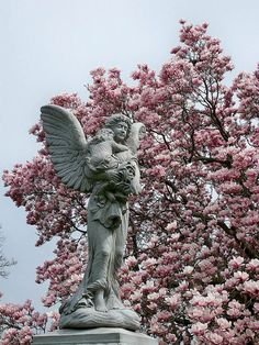 Angel Magnolia ....   At Lutheran All Faiths Cemetery.
