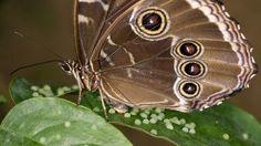 Fotonatura: workshop fotografico alla Casa delle #Farfalle di #Bordano sabato 3 settembre