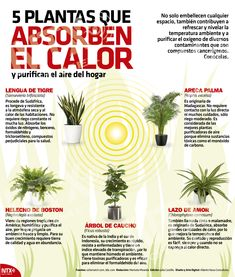 Eco Garden, Natural Garden, Green Garden, Garden Plants, Indoor Plants, House Plants, Organic Gardening, Gardening Tips, Plantas Indoor