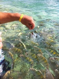 Isla Mujeres - Yes the fish really do come up to eat out of your hands.