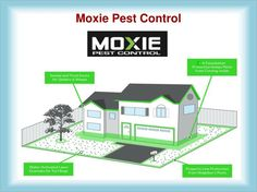 More Ideas From Moxie Pest Control
