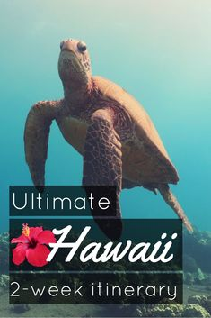 If you have only 2 weeks to visit and scuba dive in Hawaii, here is my ultimate itinerary in Maui and Big Island for scuba divers Hawaii Travel Guide, Travel Tips, Usa Travel, Travel Guides, Kohala Coast, Hawaii Destinations, West Maui, Volcano National Park, Hawaii Vacation