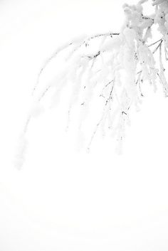 White on White by maaniemi