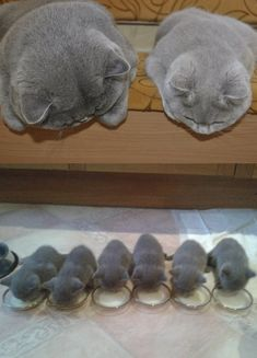 awwww-cute: Watching the babies (Source: http://ift.tt/1KoBCPZ)