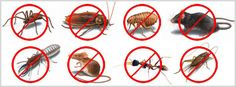 Are you are looking for Pest Control Services in Dubai and Pest Control in Abu Dhabi? Maxicareme is leading pest control companies in Dubai providing Cockroach Control, Rodent Control, Bed Bug Control and pest control services in Dubai and Abu Dhabi. Bed Bug Control, Mosquito Control, Best Pest Control, Pest Control Services, Control Issues, Cockroach Control, Types Of Insects, Termite Control
