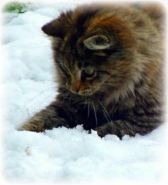 Kitten In The Snow by Autopsied.deviantart.com on @deviantART