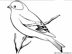 Aves dibujo - Imagui