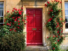 Red door and roses