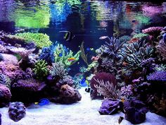 salt water aquarium | saltwater aquariums amazing Saltwater Aquariums
