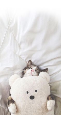 Cat With Teddy Bear cute animals cat cats adorable animal kittens pets kitten teddy bear funny animals I Love Cats, Crazy Cats, Cute Cats, Baby Animals, Funny Animals, Cute Animals, Wild Animals, Funny Cats, Kittens Cutest