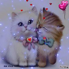 Süß: Daizo und Janna💞👫 - New Ideas Kittens Cutest, Cats And Kittens, Art Mignon, Photo Chat, Beautiful Gif, Glitter Graphics, Love Pictures, Cat Gif, Cute Love