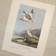 Vintage Bird Illustration  Snow Lark  Audubon Book by SimplySuzula