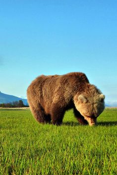 Bear. Wow. Huge.