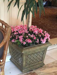 Iron Garden Gates, Flower Containers, Plants, Plant, Flower Boxes, Planets, Flower Planters