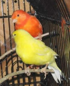 If we had these birds, we'd name the yellow one Bananapop, and the orange one Creamsicle! <3