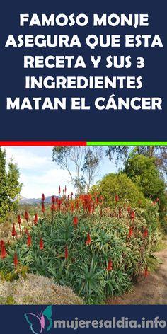 Manzanita, Healthy Tips, Detox, Medicine, Herbs, Cilantro, Nature, Instagram, Frases