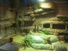 Fake Rock Possibilities? - Reptile Forums