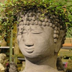 Buddha Head Planter gives your favorite plants unexpected, yet serene character. One of the most popular in the series of cast stone head planters, this Buddha Planter is original garden sculpture, cr Buddha Garden, Large Flower Pots, Face Planters, Concrete Planters, Buddha Sculpture, Starting A Garden, Palm Beach Gardens, Unusual Plants, Buddha Head