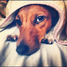#cute dog  A Healthy Dog is a Happy Dog / www.PetWellbeing.org