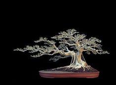 Bonsai Pruning, Bonsai Ficus, Bonsai Art, Bonsai Garden, Murraya Paniculata, Bonsai Styles, Fun Crafts, Nature, Flowers